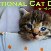October 29 is National Cat Day